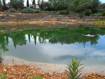 Der noch junge Teich entwickelt sich rasch...